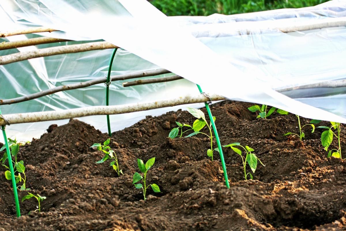 Protéger les plantes du gel: comment prévenir les dommages dus au gel