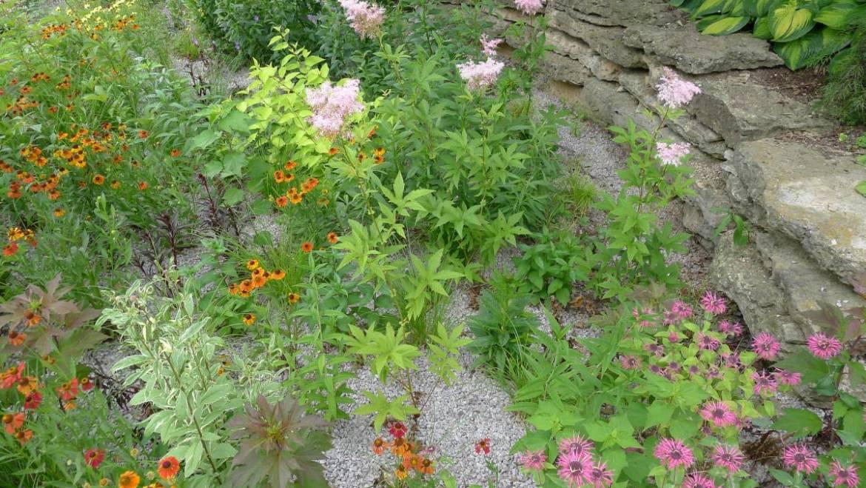 Comment construire un jardin de pluie »wiki utile Plantes et dessins