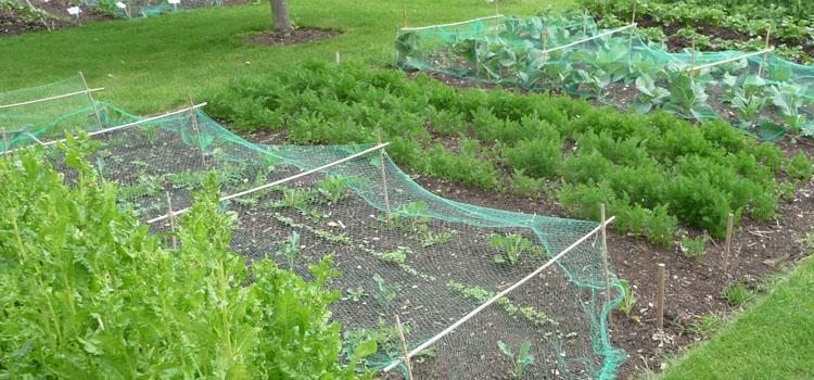 5 façons de transformer une pelouse en lit de jardin