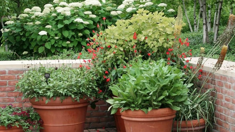 Comment fertiliser les plantes dans des conteneurs