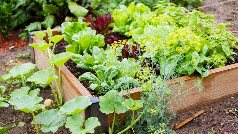 Méthodes de jardinage: Conteneurs, lits surélevés et jardins creusés