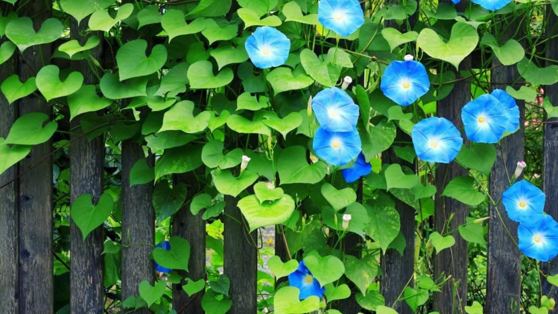 Prédire la météo avec des plantes