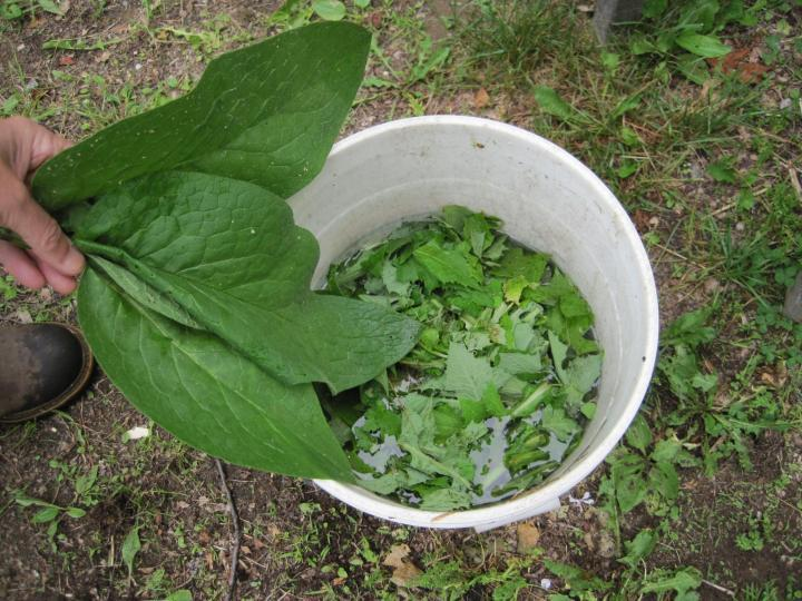 Thé d'engrais des plantes, des mauvaises herbes et de l'herbe