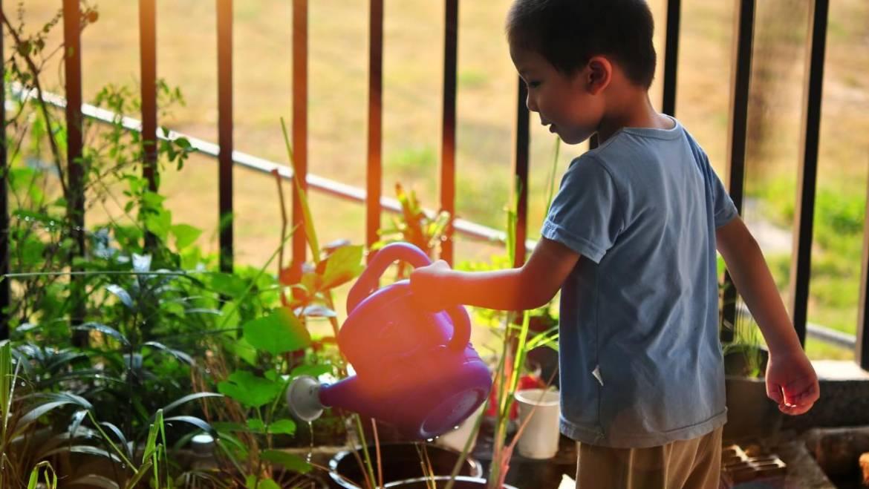 Conseils de jardinage d'été pour garder votre jardin en pleine croissance