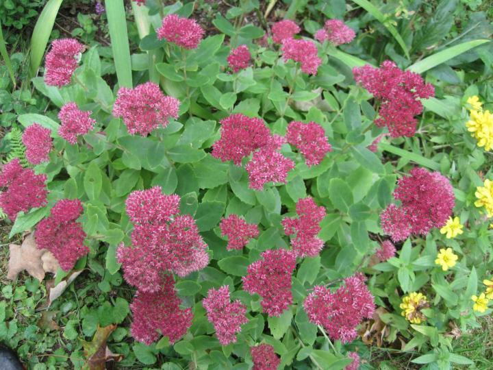 Les meilleures fleurs d'automne pour votre jardin | Que planter pour l'automne