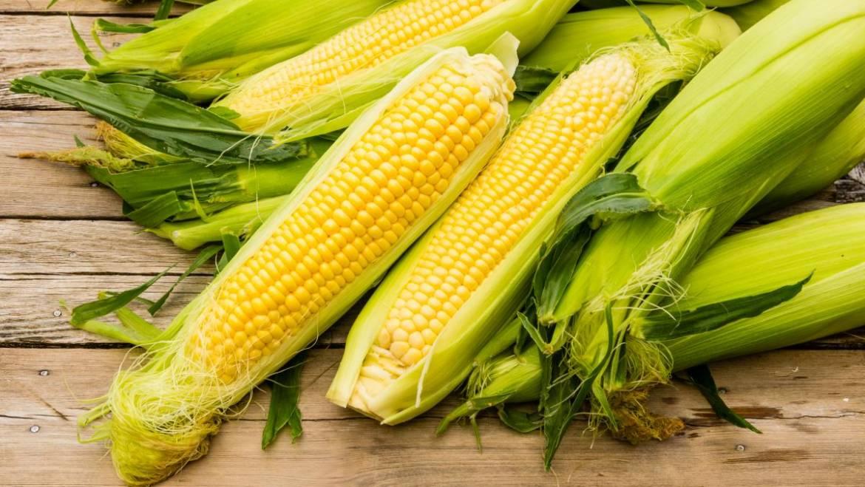 Comment congeler le maïs: congeler le maïs frais pour plus tard