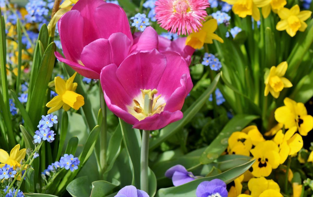Bulbes de fleurs de printemps à planter à l'automne