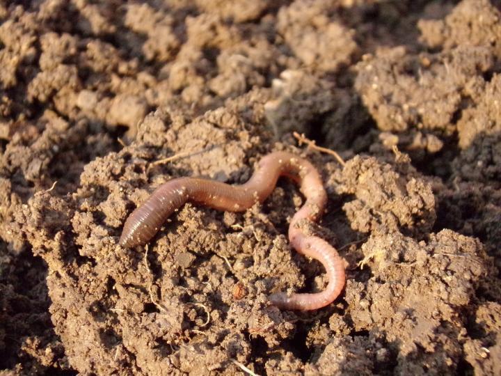 Jardinage d'automne: préparez votre sol à l'automne pour le jardin de l'année prochaine