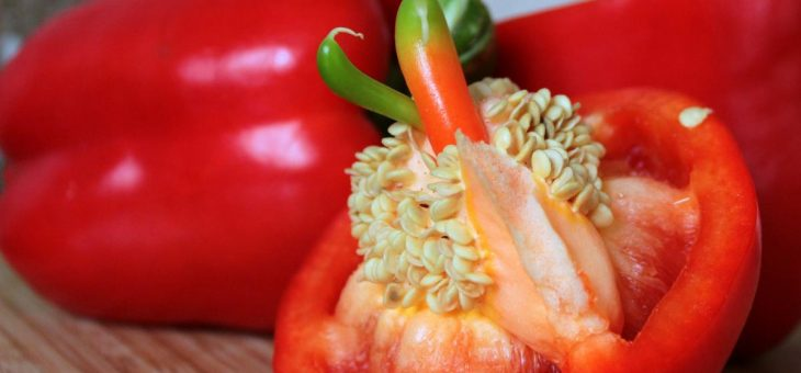 Comment conserver les graines de légumes: Guide de conservation des graines