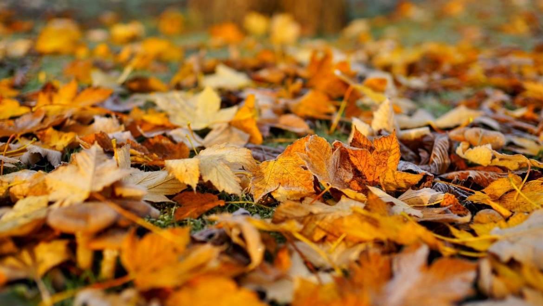 Que faire avec les feuilles d'automne: 8 façons d'utiliser les feuilles d'automne