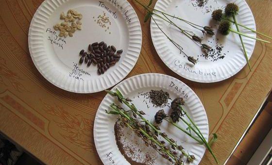 Économie de graines: comment conserver les graines de fleurs du jardin