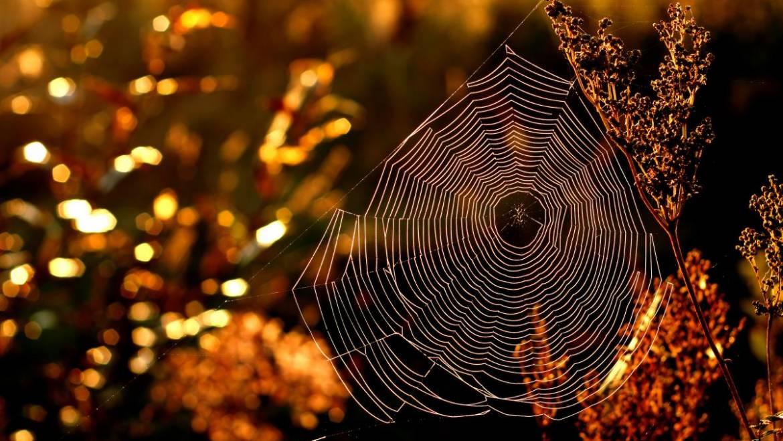 Comment les insectes prédisent le temps |  Proverbes et folklore