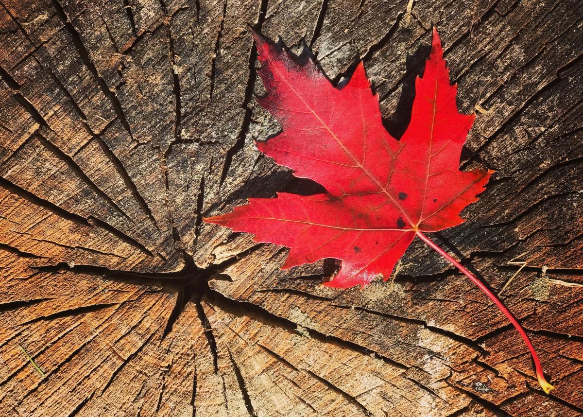 4 façons dont Thanksgiving canadien diffère de Thanksgiving américain