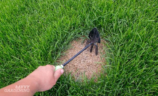 Comment réparer une tache brune sur la pelouse due aux animaux domestiques