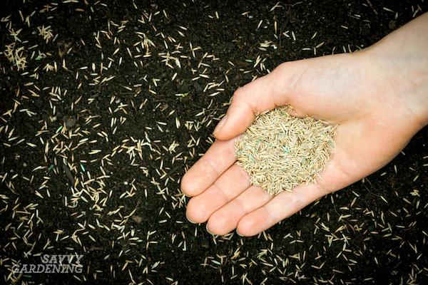 À quelle distance pour planter des graines de gazon
