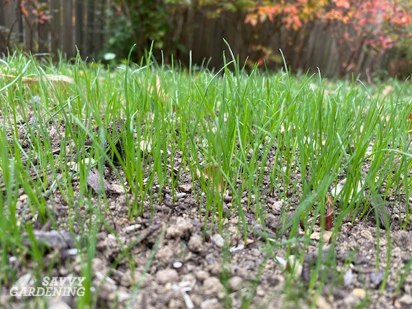 Le bas sur la plantation de semences de gazon