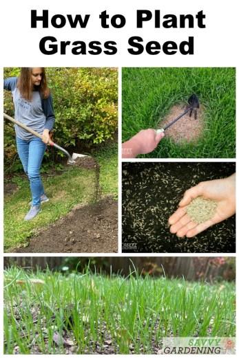Apprendre à planter des graines de gazon est essentiel pour chaque propriétaire.  Obtenez des conseils pour semer de nouvelles graines de gazon dans des zones nues ou sur de grandes surfaces.