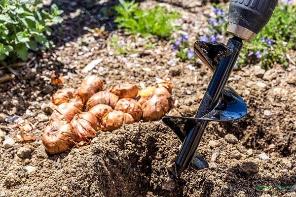 Les tarières Power Planter facilitent la plantation de bulbes!