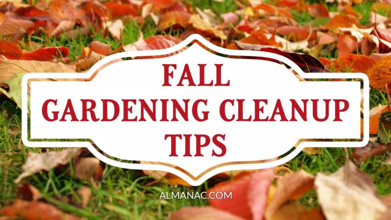 10 conseils de nettoyage d'automne pour un meilleur jardin printanier