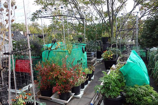un jardin sur le toit entier avec des jardinières sous irriguées