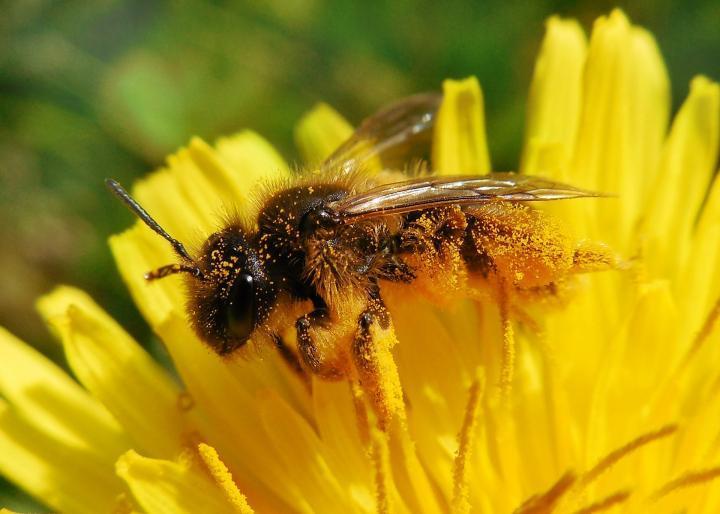 Les meilleures fleurs pour les abeilles