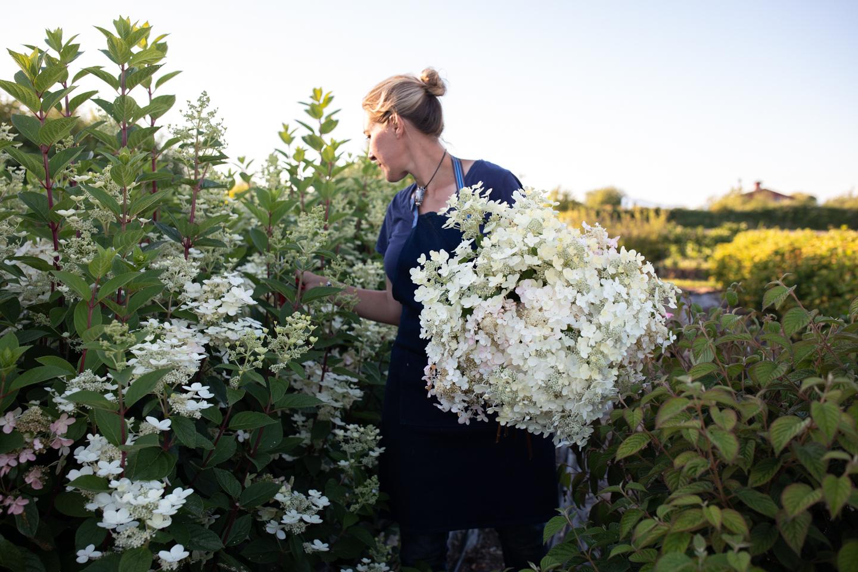 Femme avec des plantes d'hortensia