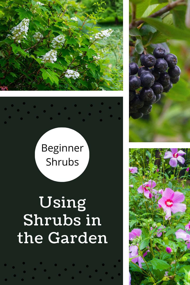 Meilleurs arbustes pour les débutants – Comment utiliser les arbustes dans le jardin