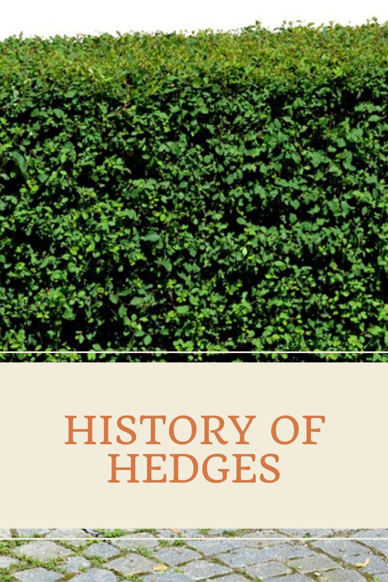 Hedges Throughout History – Découvrez l'histoire des haies