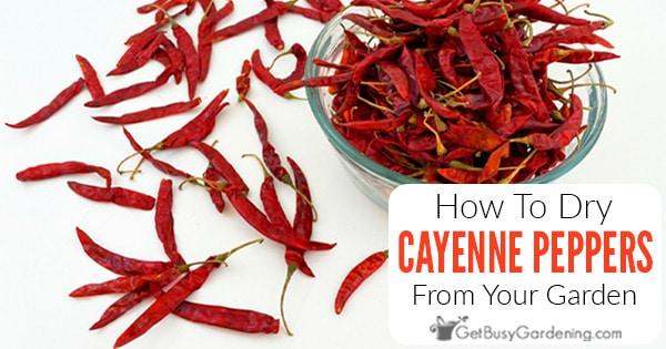 4 façons de sécher les piments de Cayenne pour éviter la moisissure