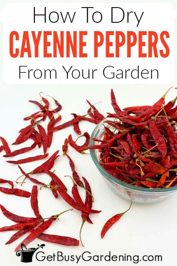 Comment sécher les poivrons de Cayenne de votre jardin