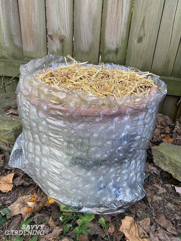 L'ail en pot isolant pour les mois d'hiver est un facteur majeur de succès.