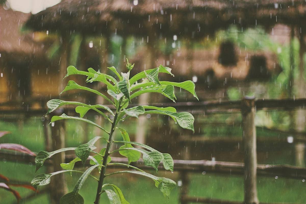 Pluie sur les plantes