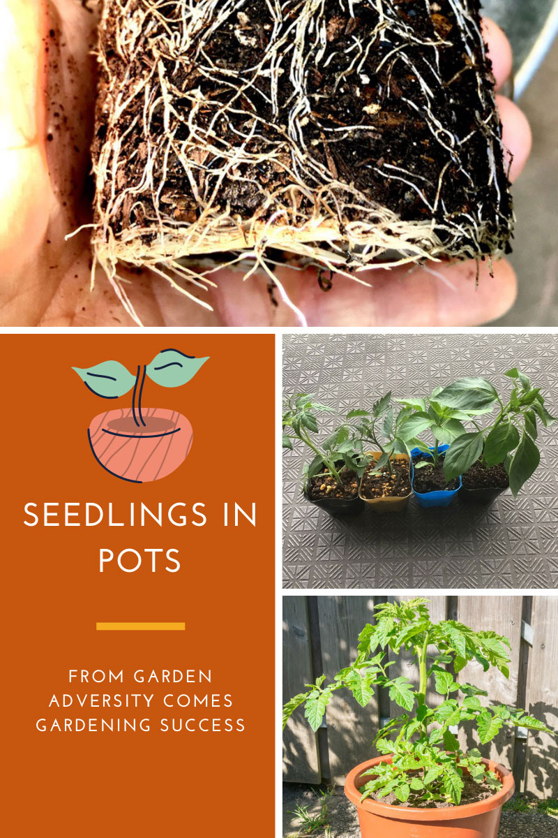 Les semis en pots – de l'adversité du jardin vient le succès du jardin