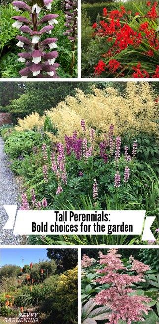 Vivaces hautes: choix audacieux pour le jardin