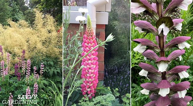 Ajouter de la hauteur au jardin avec des plantes audacieuses