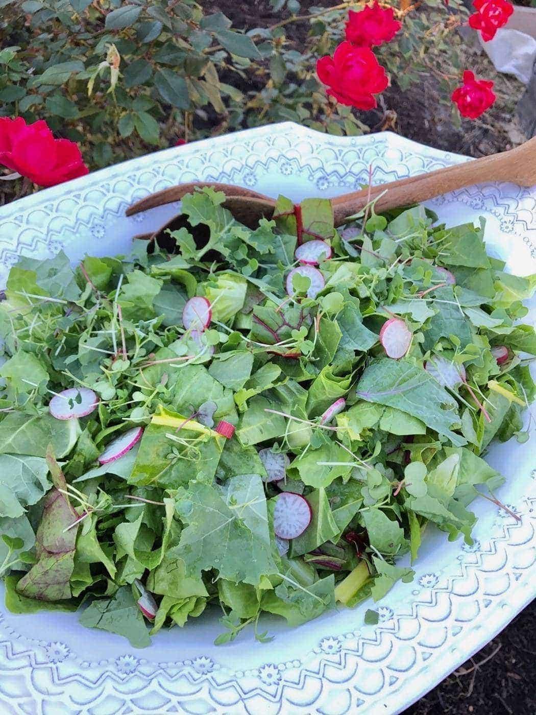 Comment faire pousser une salade de jardin