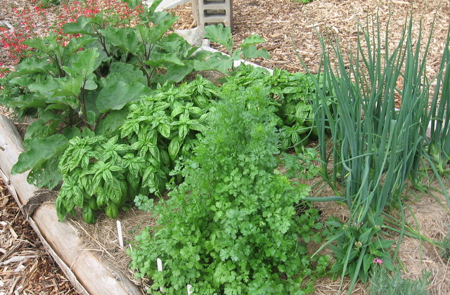 lit de jardin potager