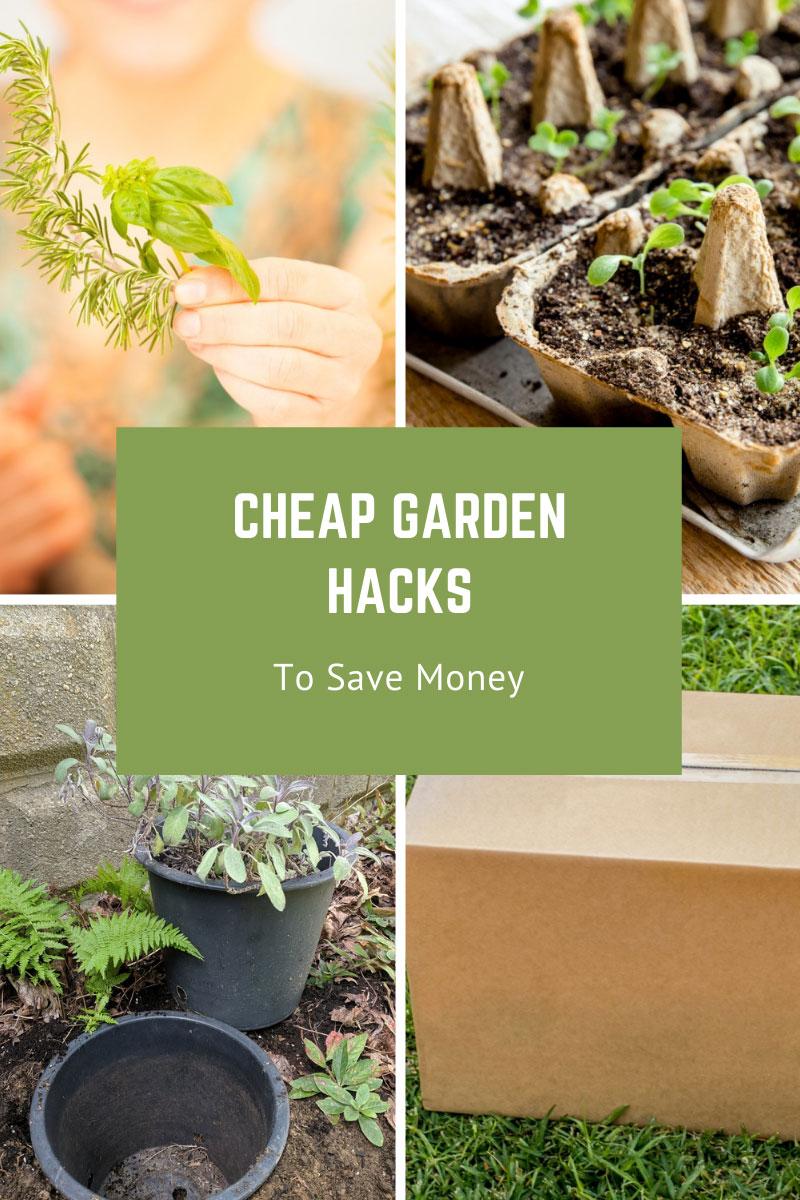 Astuces de jardinage ingénieuses – Top des astuces de jardin pour économiser de l'argent