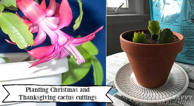 Comment faire plus de plantes de vacances