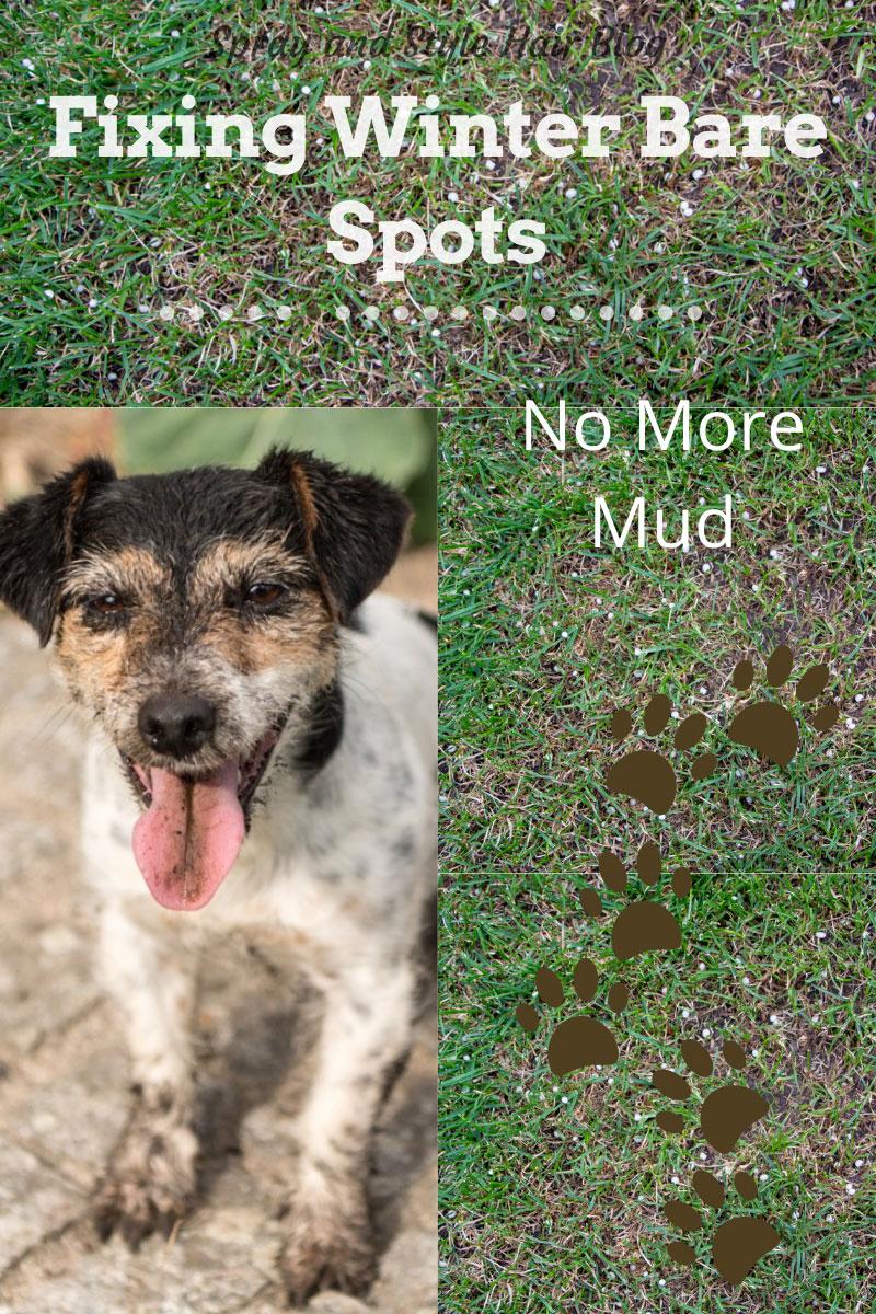 Réparer les taches nues en hiver – Les mauvaises herbes de la pelouse dans l'herbe signifient la boue à l'intérieur