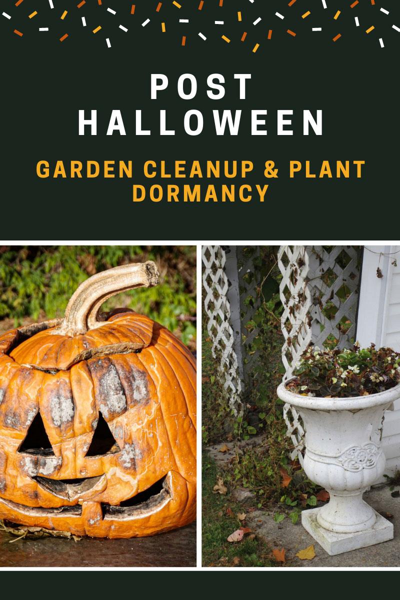 Activités post-Halloween – Début de la période de nettoyage et de dormance des plantes