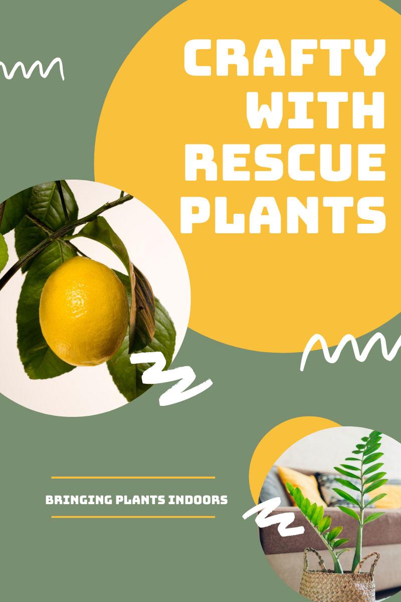 Crafty With Rescue Plants – La compétence de sauver des plantes mourantes