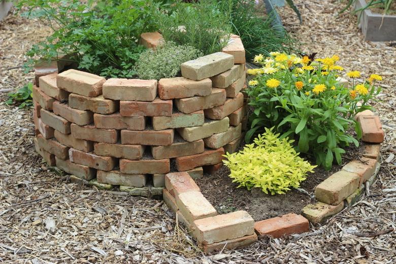 comment faire pousser du basilic dans votre jardin