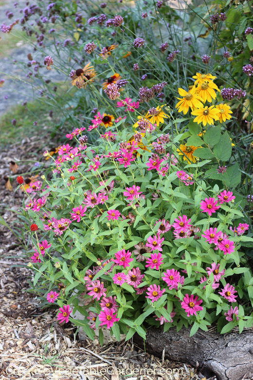 idées de jardin potager et fleuri