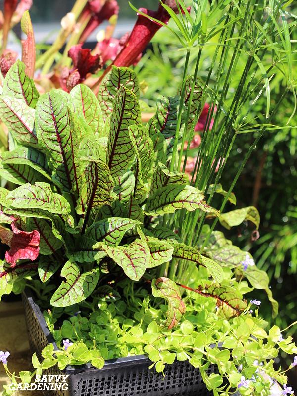 Un jardin en pot avec des plantes comestibles et ornementales