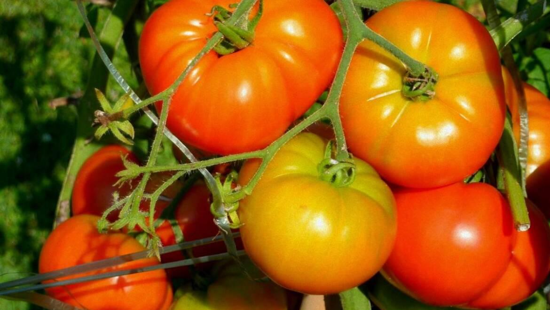 Guide de culture du jardinage de légumes |  L'almanach du vieux fermier