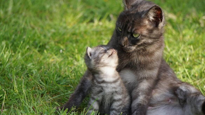 Tableau d'âge du chat: années du chat en années humaines |  Quel âge a mon chat?