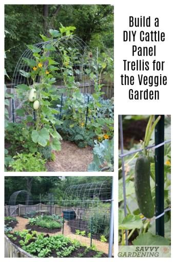 Construire un treillis de panneaux de bétail pour le jardinage vertical de légumes