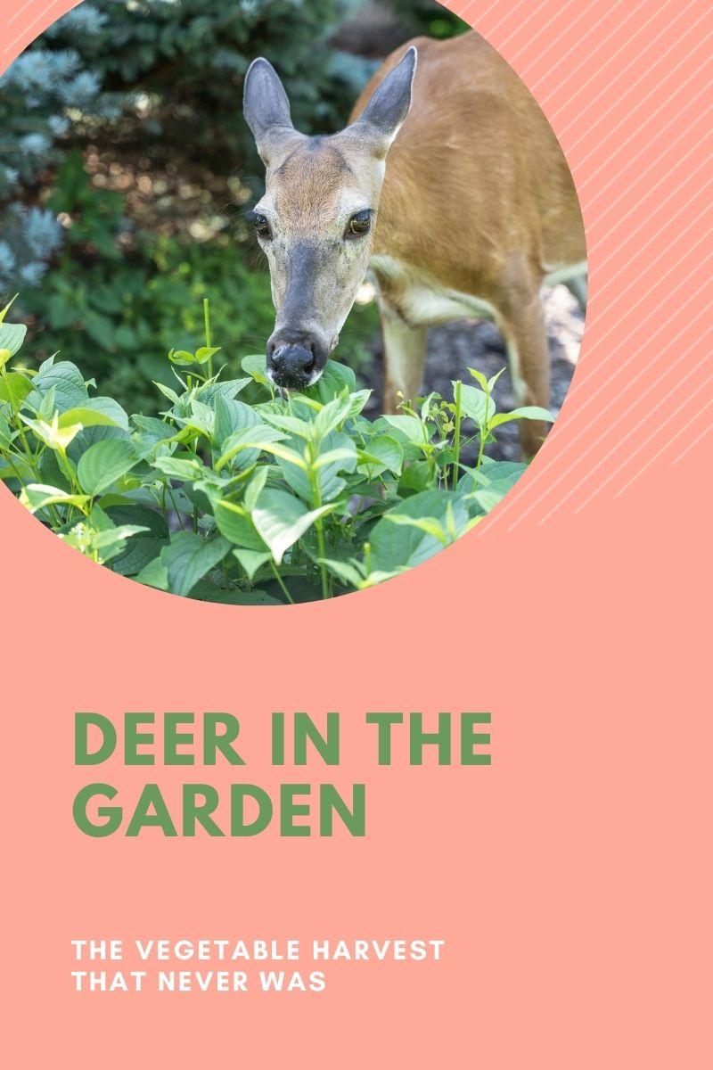 Comment gérer les plantes mangeant des cerfs