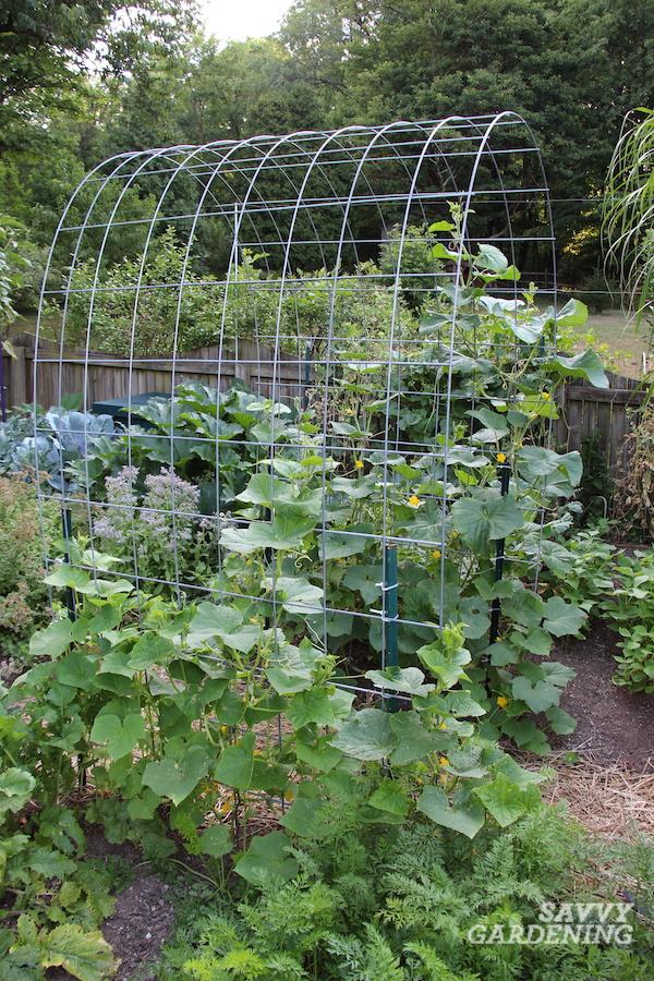 Comment construire un treillis de panneaux de bétail pour le jardinage vertical